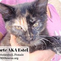 Adopt A Pet :: Torte - Temecula, CA