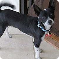 Adopt A Pet :: Robin - Scottsdale, AZ