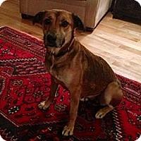 Adopt A Pet :: Gabby - Hamilton, ON