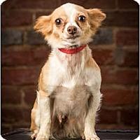 Adopt A Pet :: Tinkerbell - Owensboro, KY