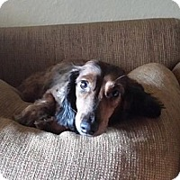 Adopt A Pet :: RYKER (aka Ry-Ry from Tucson) - Portland, OR