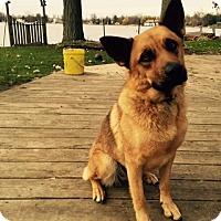Adopt A Pet :: Brita - Laingsburg, MI