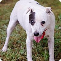 Adopt A Pet :: Chloe - Conyers, GA
