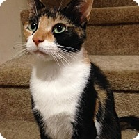 Adopt A Pet :: Roxie_Courtesy Post - Columbia, MD