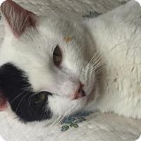 Adopt A Pet :: Tanto - Philadelphia, PA