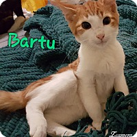 Adopt A Pet :: Bartu Org & White Baby - McDonough, GA