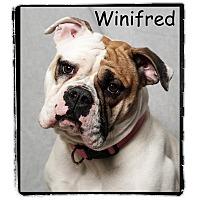 Adopt A Pet :: Winifred - Warren, PA