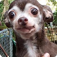Adopt A Pet :: Rosie Marie - Orlando, FL