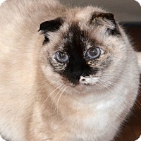 Adopt A Pet :: Matilda - Davis, CA