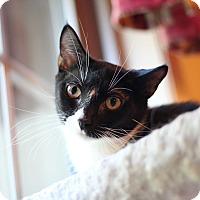 Adopt A Pet :: Charley - Richmond, VA