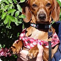 Adopt A Pet :: REGINA - Portland, OR