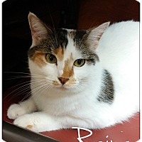 Adopt A Pet :: Reina - Flushing, NY