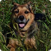 Adopt A Pet :: Mieka - Edmonton, AB