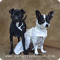 Adopt A Pet :: Manley - Las Vegas, NV