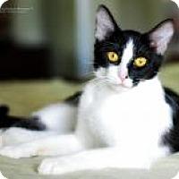 Adopt A Pet :: Jane - San Carlos, CA