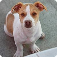 Adopt A Pet :: Dan Fencher - Cranston, RI