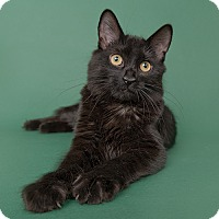 Adopt A Pet :: Macy - Wilmington, DE