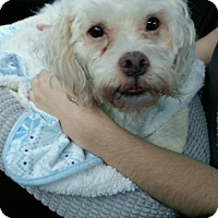 Adopt A Pet :: Falcor - West Palm Beach, FL