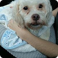 Adopt A Pet :: Falcor - West Palm Beach, FL