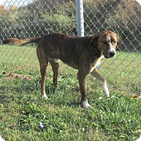 Adopt A Pet :: Newly - Mount Sterling, KY