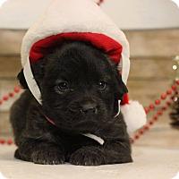 Adopt A Pet :: Alana - Waldorf, MD