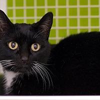 Adopt A Pet :: Hillary - Troy, MI