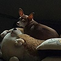Adopt A Pet :: Lucky - Freeport, NY