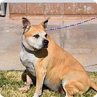 Adopt A Pet :: Alexi formerly Lexie - Las Vegas, NV