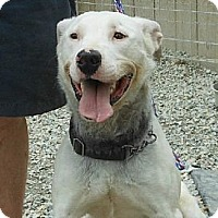 Adopt A Pet :: Grayson - Midlothian, VA