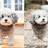Adopt A Pet :: Princess - Downers Grove, IL