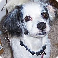 Adopt A Pet :: Patches - Orange Park, FL