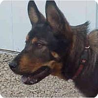 Adopt A Pet :: Akuma - Scottsdale, AZ