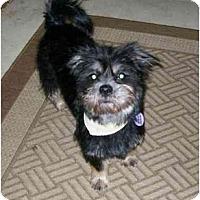 Adopt A Pet :: Jasmin - Rigaud, QC