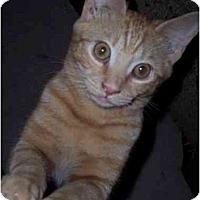 Adopt A Pet :: G-Man - Delmont, PA