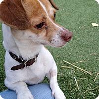 Adopt A Pet :: Tex - Meridian, ID