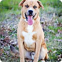 Adopt A Pet :: Riley - El Campo, TX