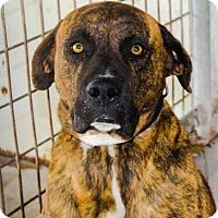 Adopt A Pet :: Mason - Schaumburg, IL