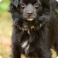 Adopt A Pet :: Colt has an adorable video - Los Angeles, CA