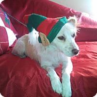 Adopt A Pet :: Shelia - San Diego, CA