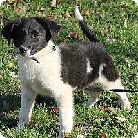 Adopt A Pet :: Olin - Windham, NH