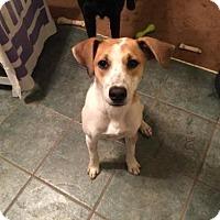 Adopt A Pet :: Barney - Cary, NC