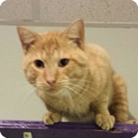 Adopt A Pet :: Colonel - Walden, NY