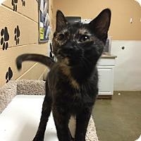 Adopt A Pet :: Ruby - Smithfield, NC
