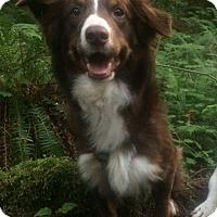 Adopt A Pet :: May - Seattle, WA