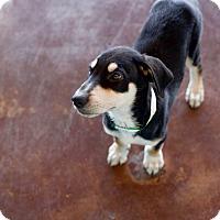 Adopt A Pet :: Mick - San Antonio, TX