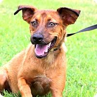 Adopt A Pet :: Kenny - Glastonbury, CT