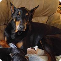 Adopt A Pet :: Kaiser - Richmond, KY