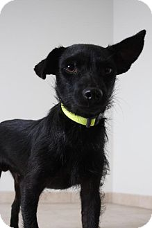 Terrier (Unknown Type, Medium) Mix Dog for adoption in Edina, Minnesota - Stan D161354