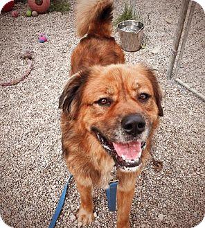 Leonberger Mix Dog for adoption in Belleville, Michigan - Barry