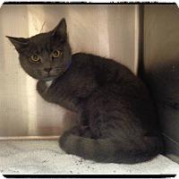 Adopt A Pet :: AMORE - Marietta, GA